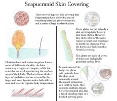 Scapucranid Skin Coverings by Biofauna25