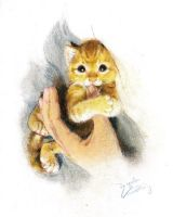 My Cat Ginger 4 by angela-wong