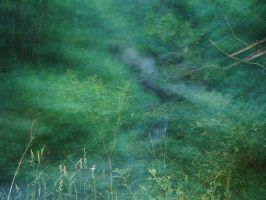 Forest Blur by DrMario64