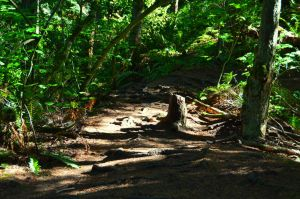 Whatcom Falls Park-09Aug2015-021 by SkyfireDragon