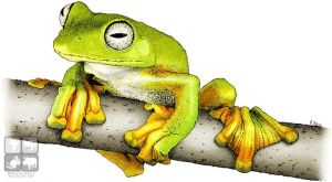 Wallaces Flying Frog by rogerdhall
