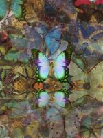 Mirror Butterfly by Veni-Scripsi-Vici
