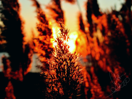 Scorching Weed by Mulsivaas