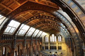 NHM Roof by roodpa