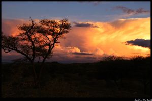 Dusk in the Bush by tendence