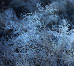 Foggy Frost by tidesend