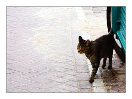 2248-5 - The catwalk by bupo