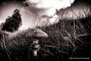 Fungi by Elfvingphotography