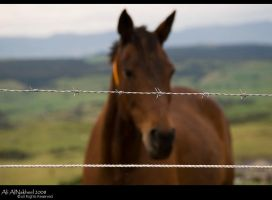 Out Of Focus by IAMSORRY87