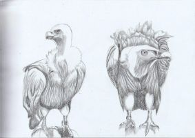 Birds At Zoo by Moondancer3