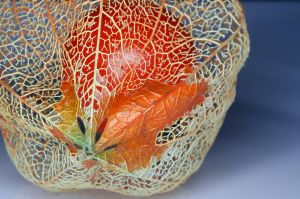 Chinese Lantern Plant Skeleton by Caitiekabob