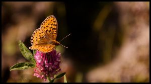 Butterfly by meowesty