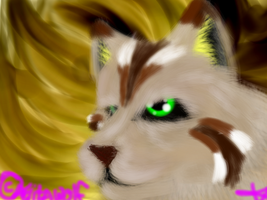 Chippy- adopted cat by Aelita-wolf