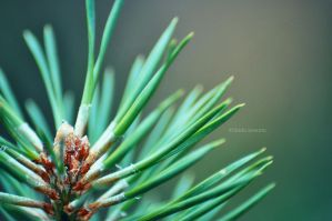 Needles by LindaMarieAnson