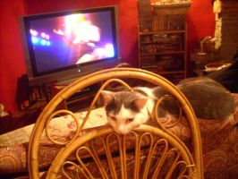 TONNY DOES NOT LIKE TV by bluesse