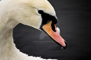 Hyde Park Swan by Hashterix