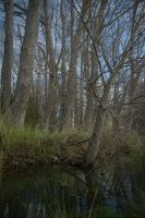 The Copse 2 by FallowpenStock