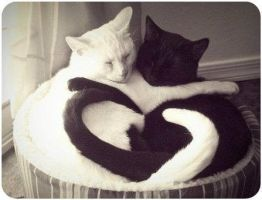 Kitty Love by vanityAtTached31
