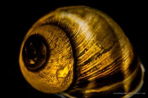 Glowing Snail by isischneider