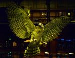 Natural History Museum - Paris by Pins-n-Feathers