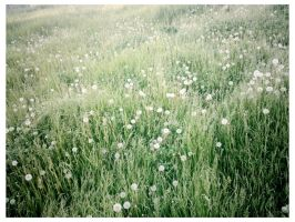 field of wishes by ksra