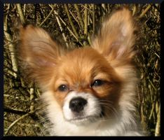 EWOK Mr Papillon by Mado29