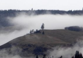 Distant Fir in Fog by Whimseystock