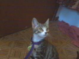 My New Kitten Cookie! by HONDTangled