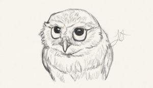 Owl by Akadafeathers