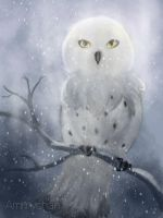 The owl in my dream. by Ammychan92698