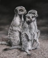 My Meerkats, pastel, charcoal by AngelaMaySmith