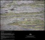 Old Mossy Plywood 03 by Neyjour