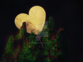 Heart of the forrest by RokkeR