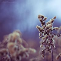 winter is close VIII by JoannaRzeznikowska