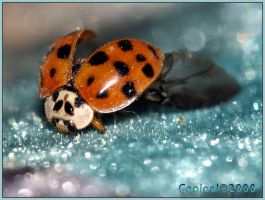 Lady bug by Gooiool