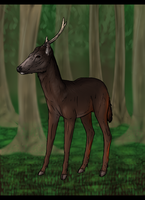 The Sambar Deer by Sambhur