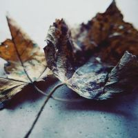Fallen Leaves by ScENeYmE