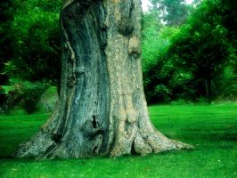 ...roots of character by DesiaB