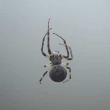 Spider 2 by Archangelical-Stock