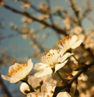 First In The Spring by xXHizumi-loverXx