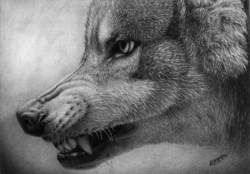 Wrr.. (wolf) by waderra