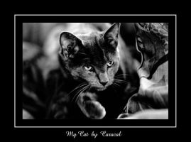 My Cat by caracal
