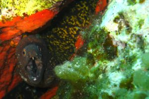 Moray Eel by kkeman