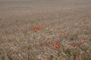 A touch of colour by jerdenberg