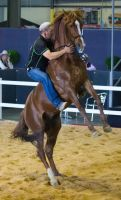 STOCK - 2014 Total Equine Expo-40 by fillyrox