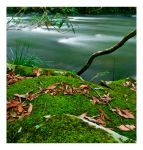 Moss by the riverside. by The-name1ess