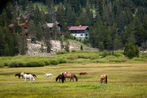 Alpine grazing by kayaksailor