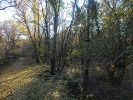 November 2013 - Path in the woods 4 by HermitCrabStock