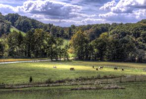 Ann's Horses Down In The Valley by toddcarter