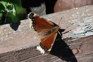 Butterfly On The Fence II by ByronGiant